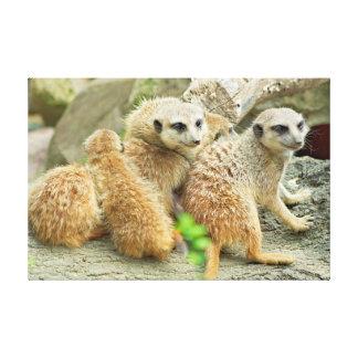 Meerkat's Family - Canvas