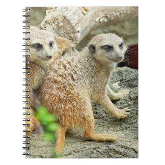 Meerkats - Notebook