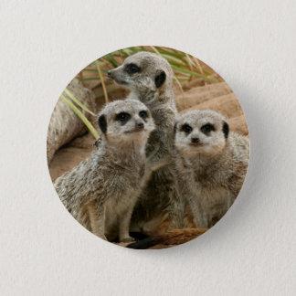 Meerkats on the lookout 6 cm round badge