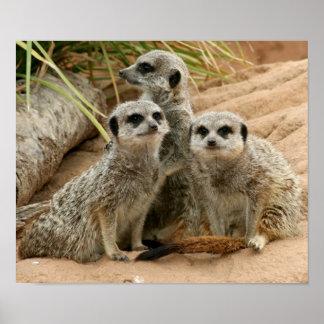 Meerkats on the lookout poster