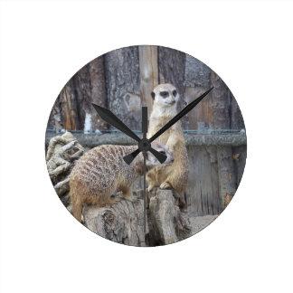 Meerkats Round Clock