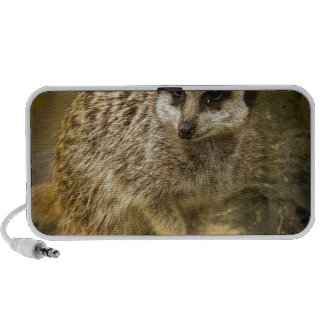 Meerkats Speaker System