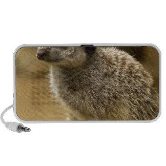 Meerkats iPhone Speakers