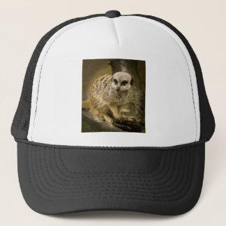 Meerkats Trucker Hat
