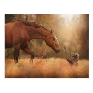 Meeting A Friend In The Field Postcard