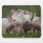 Meeting of the Three Little Pigs Mouse Pads