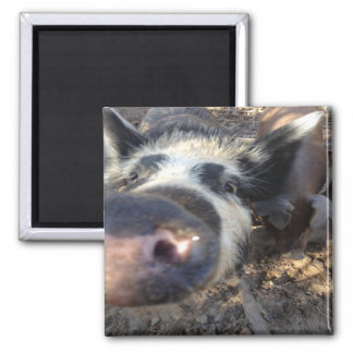 Meg The Pig Square Magnet
