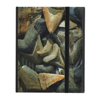 Megalodon Fossil Shark Teeth iPad Folio Cases