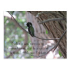 Meister Eckhart Contemplation Quote Hummingbird Postcard