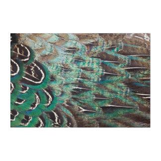 Melanistic Pheasant Feathers Close-Up Acrylic Wall Art