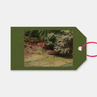 Melbourne Zoo Tiger bag tags