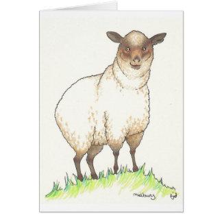 Melbury the Shetland Sheep Card