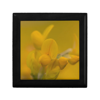 Mellow Yellow Small Square Gift Box