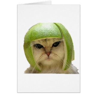 melon cat card