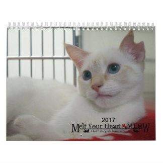 Melt Your Heart - MEOW 2017 Kitten Calendar