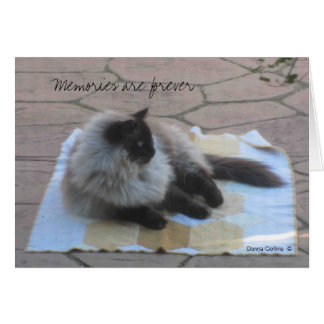 Memories cat note card