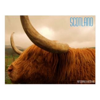 memory 2 216 SCOTLAND Photography by Kirsten Postcards