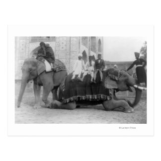 Men Riding Elephants in India PhotographIndia Postcard