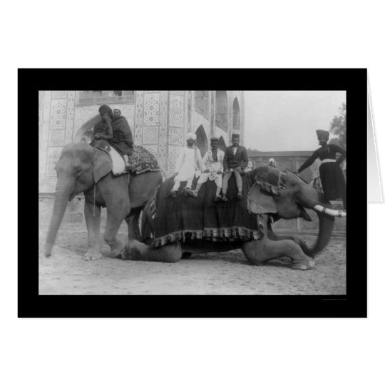 Men Travelling by Elephant in India 1903 Card