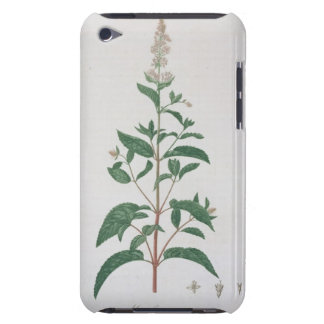 Mentha Piperita from 'Phytographie Medicale' by Jo iPod Touch Covers