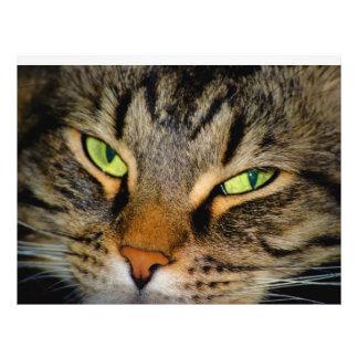 Meow Flyer Design
