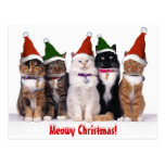 """Meowy Christmas!"" Cats"