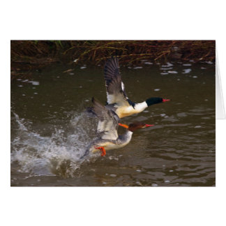 Merganser's Take-off Card