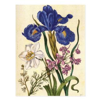Merian Floral Art Postcard