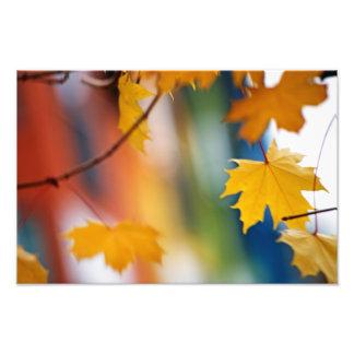 Meridian Fall. Photo Print