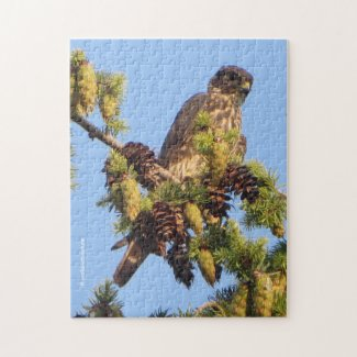 Merlin Falcon in the Pine Tree Jigsaw Puzzle