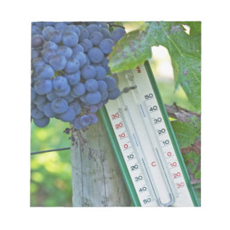 Merlot grapes at Chateau la Grave Figeac, a Notepad