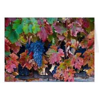 Merlot Grapes Greeting Card