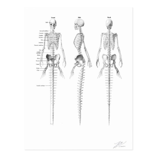 Mermaid skeleton postcard
