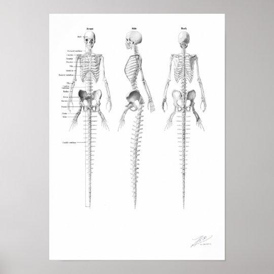 Mermaid Skeleton Poster