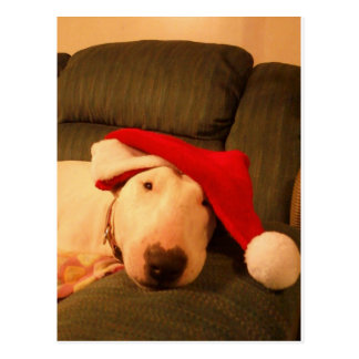 merra christmas santa hat post cards