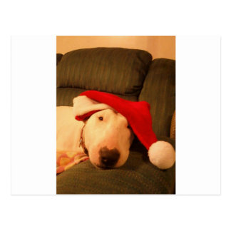 merra christmas santa hat postcards