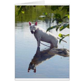 merra reflection greeting card