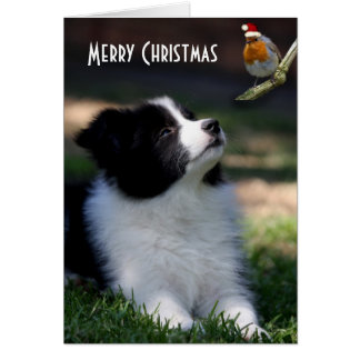 Merry Christmas Baby Border Collie Card