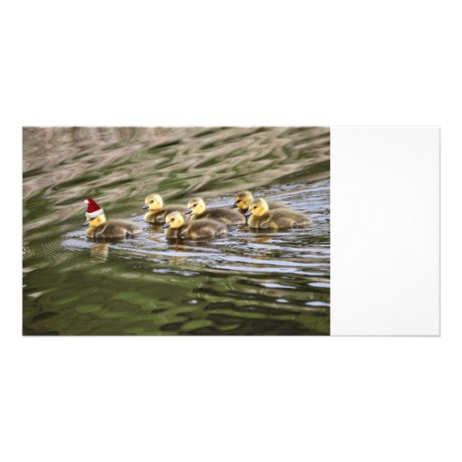 Merry Christmas Baby Geese Photo Card