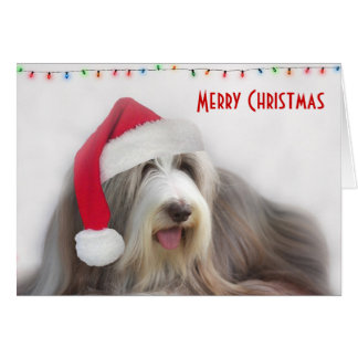 Merry Christmas Bearded Collie Greeting Card