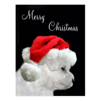 Merry Christmas Bichon Frise Post Cards