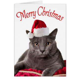 Merry Christmas,  Cat Christmas Card