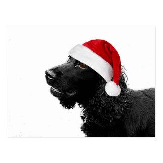 Merry Christmas Cocker Postcard