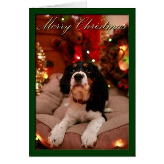 Merry Christmas English Springer Spaniel, Springer Greeting Card