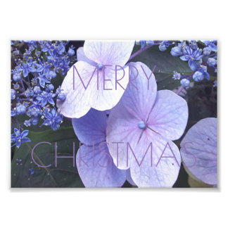 Merry Christmas Floral Purple Flowers Photography Photographic Print