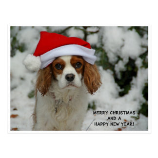 Merry Christmas from Charly Postcard
