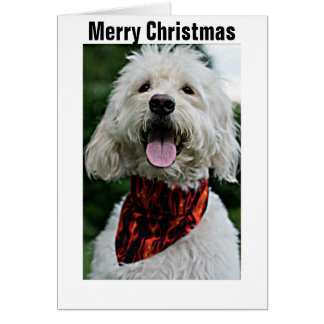 MERRY CHRISTMAS FROM DRESSED UP/HAPPY DOG GREETING CARD
