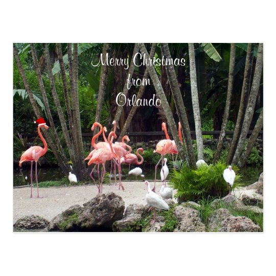 Merry Christmas from Orlando - Pink Flamingos Postcard
