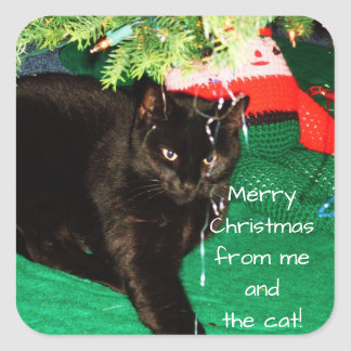 MERRY CHRISTMAS FROM THE CAT stickers