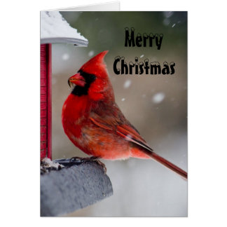 Merry Christmas Male Cardinal Note Card